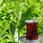 Çayın Faydaları ve Zararları