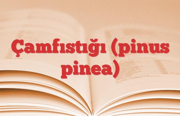 Çamfıstığı (pinus pinea)