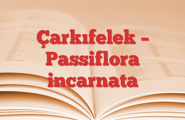 Çarkıfelek – Passiflora incarnata