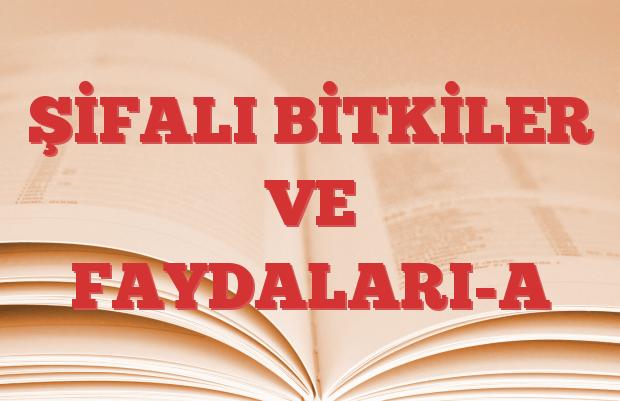 ŞİFALI BİTKİLER VE FAYDALARI-A