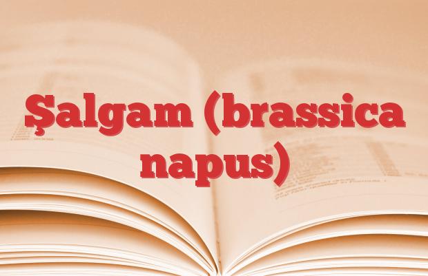 Şalgam (brassica napus)