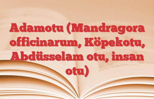 Adamotu (Mandragora officinarum, Köpekotu, Abdüsselam otu, insan otu)