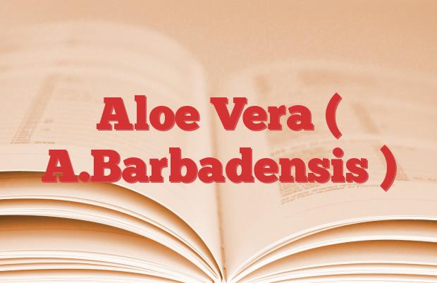 Aloe Vera ( A.Barbadensis )