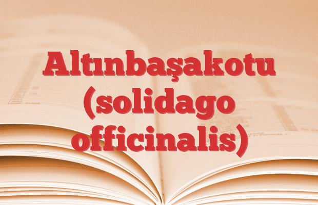 Altınbaşakotu (solidago officinalis)