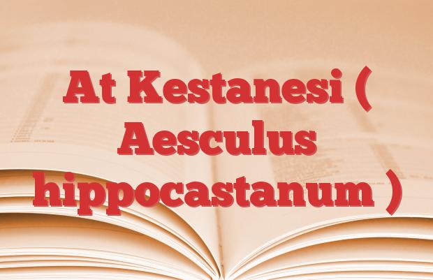 At Kestanesi ( Aesculus hippocastanum )