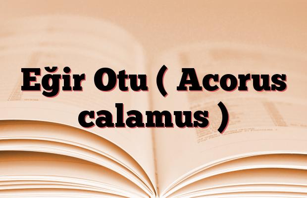 Eğir Otu ( Acorus calamus )