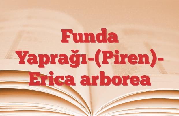 Funda Yaprağı-(Piren)- Erica arborea