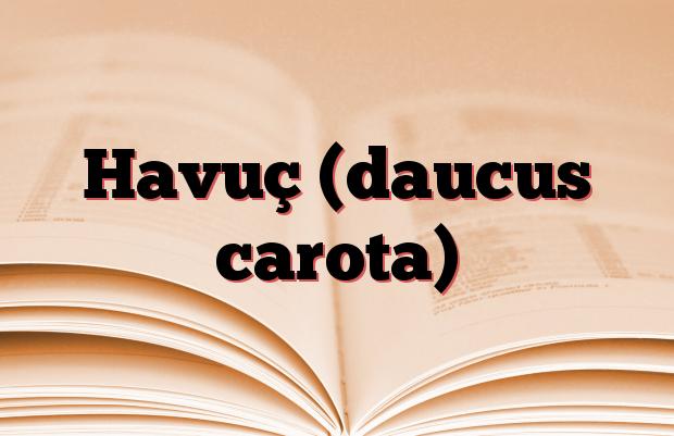 Havuç (daucus carota)