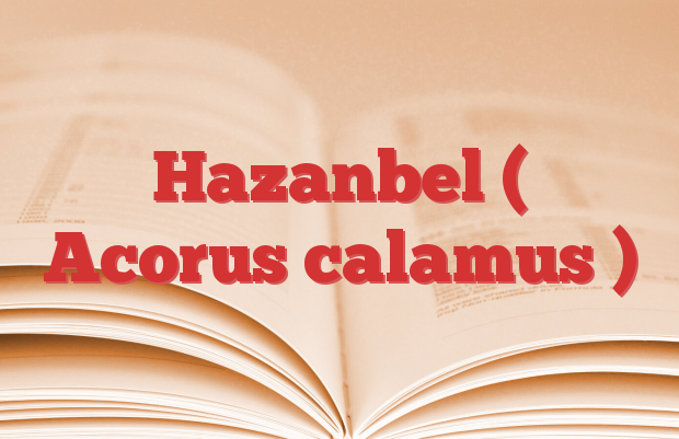 Hazanbel ( Acorus calamus )