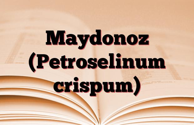 Maydonoz (Petroselinum crispum)