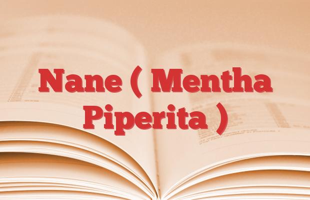 Nane ( Mentha Piperita )