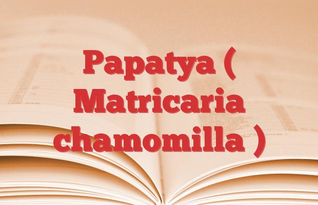 Papatya ( Matricaria chamomilla )