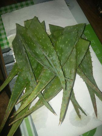 Aloe Vera Yaprakları