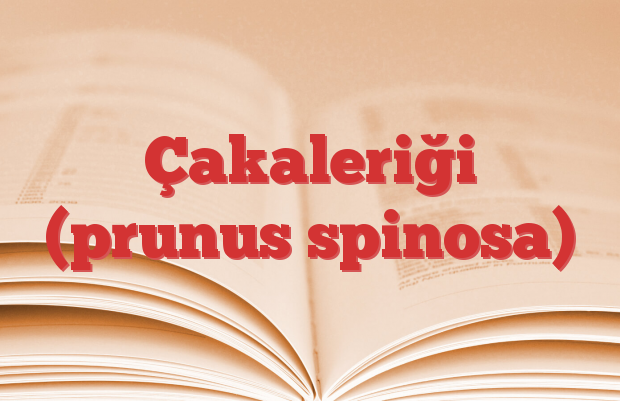 Çakaleriği (prunus spinosa)