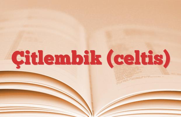 Çitlembik (celtis)