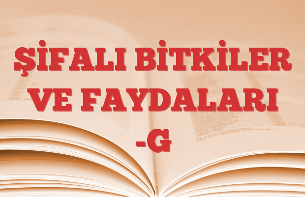 ŞİFALI BİTKİLER VE FAYDALARI -G