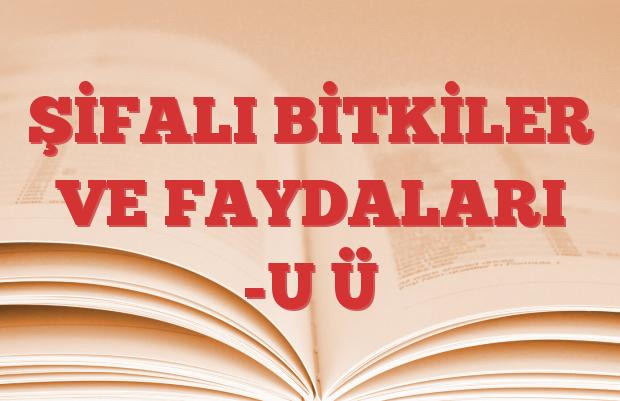 ŞİFALI BİTKİLER VE FAYDALARI -U Ü