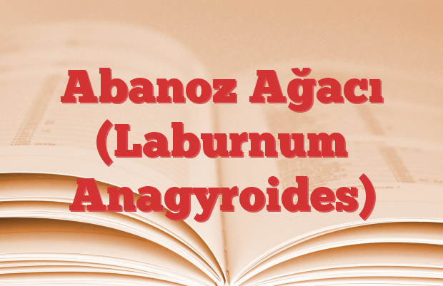Abanoz Ağacı (Laburnum Anagyroides)