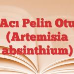 Acı Pelin Otu (Artemisia absinthium)