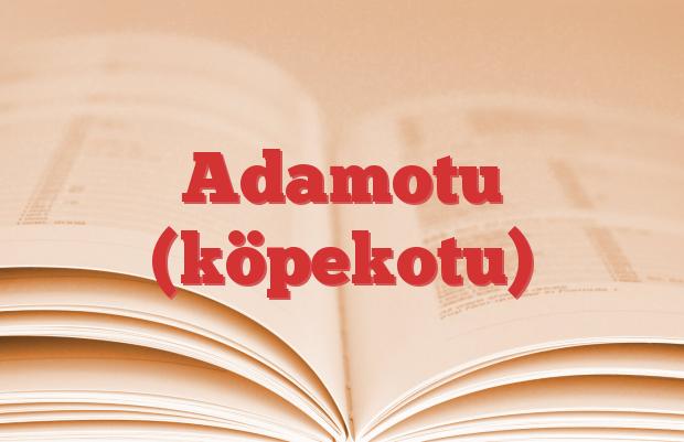 Adamotu (köpekotu)