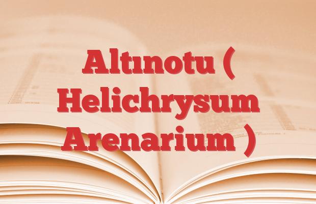 Altınotu ( Helichrysum Arenarium )
