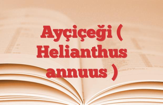 Ayçiçeği ( Helianthus annuus )