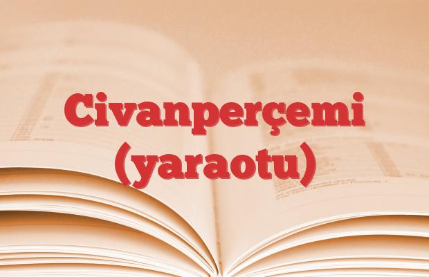 Civanperçemi (yaraotu)