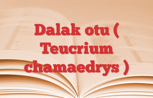 Dalak otu ( Teucrium chamaedrys )