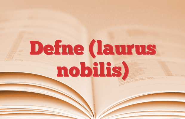 Defne (laurus nobilis)