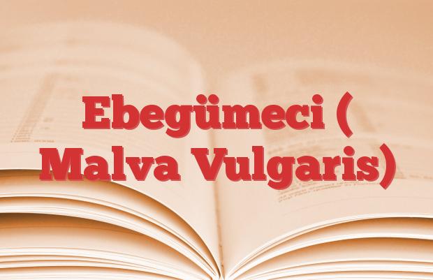 Ebegümeci ( Malva Vulgaris)