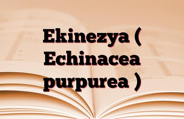 Ekinezya ( Echinacea purpurea )