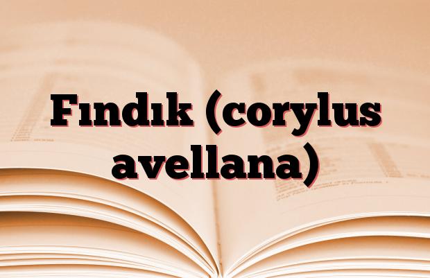 Fındık (corylus avellana)