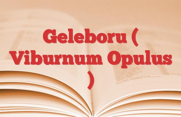 Geleboru ( Viburnum Opulus )