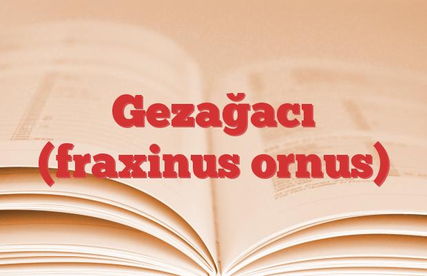 Gezağacı (fraxinus ornus)