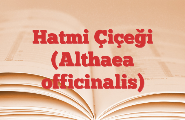 Hatmi Çiçeği (Althaea officinalis)