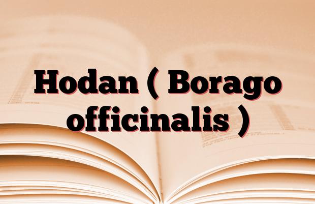 Hodan ( Borago officinalis )