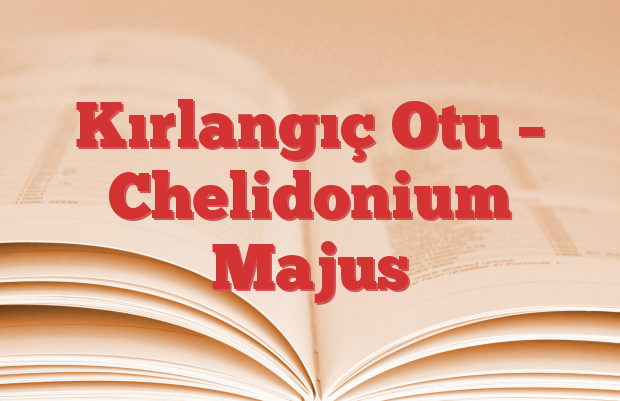 Kırlangıç Otu – Chelidonium Majus
