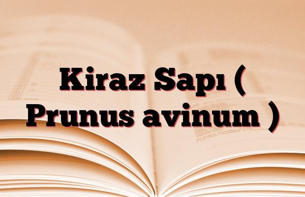 Kiraz Sapı ( Prunus avinum )