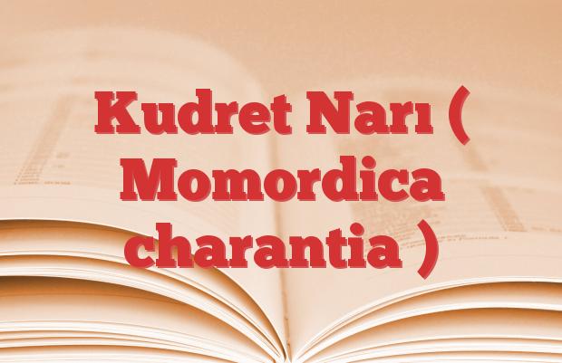 Kudret Narı ( Momordica charantia )