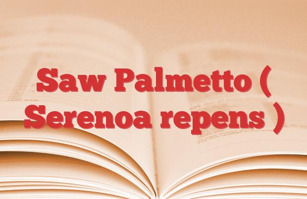 Saw Palmetto ( Serenoa repens )