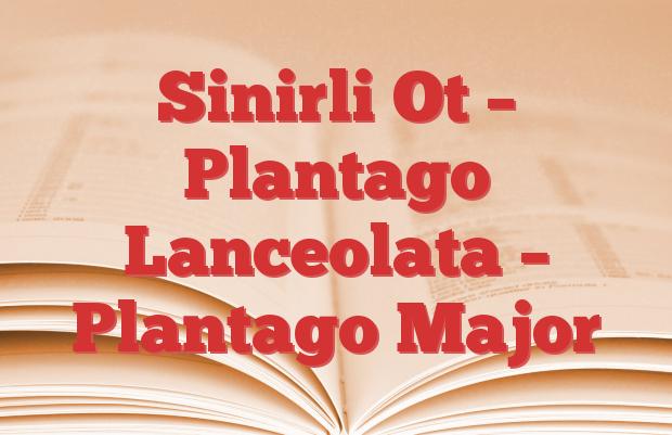 Sinirli Ot – Plantago Lanceolata – Plantago Major
