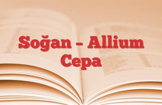 Soğan – Allium Cepa