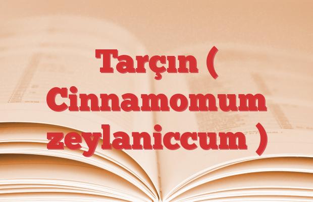 Tarçın ( Cinnamomum zeylaniccum )