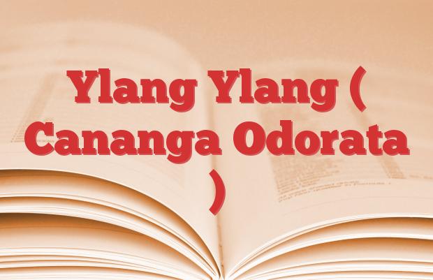 Ylang Ylang ( Cananga Odorata )