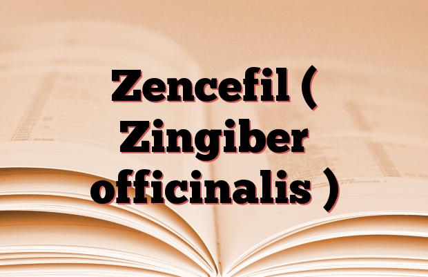 Zencefil ( Zingiber officinalis )