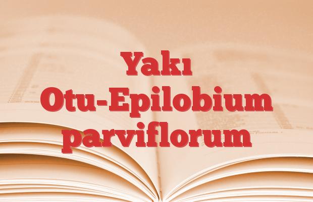 Yakı Otu-Epilobium parviflorum