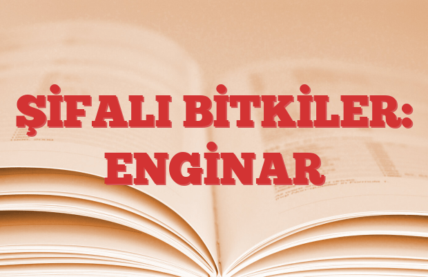 ENGİNAR
