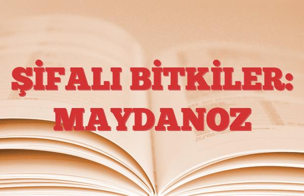 MAYDANOZ