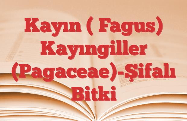 Kayın ( Fagus) Kayıngiller (Pagaceae)-Şifalı Bitki