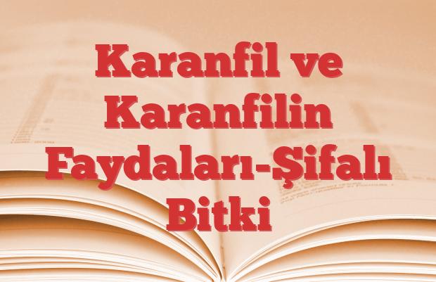 Karanfil ve Karanfilin Faydaları-Şifalı Bitki